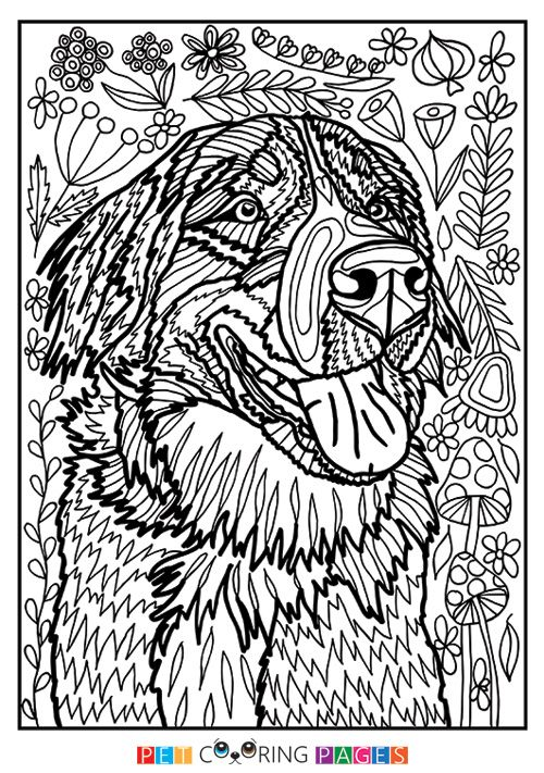 Free Printable Bernese Mountain Dog Coloring Page Available For Download Simple And Detailed Versions