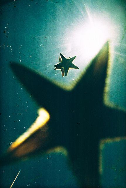 Starfish floating along. Repinned from Dana Willard.