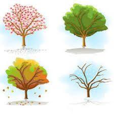 Bildresultat för årstiderna bilder