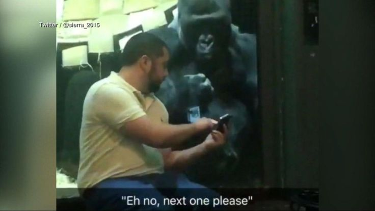 11/15/17 - Gorilla at Louisville Zoo wants man to swipe right on his photos