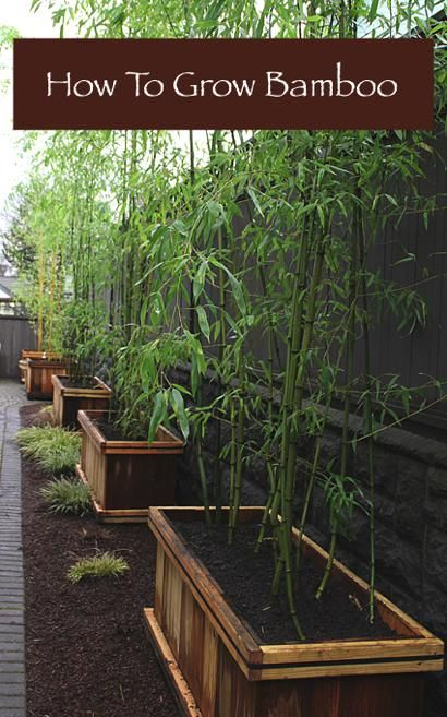 How To Grow Bamboo...http://homestead-and-survival.com/how-to-grow-bamboo/. 'Already have this in our yard, but good to know...
