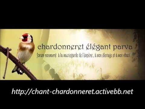 Chants d'oiseaux de France partie 1 - YouTube