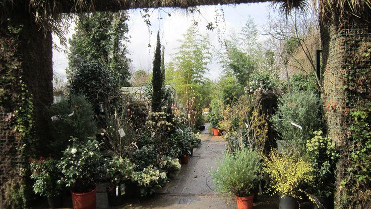 Jardinerie de fin d'hiver. A l'italienne. Photo et création Taffin