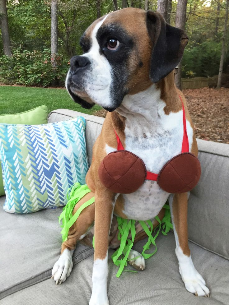Halloween Costume Roundup | Doggie Style | Hula Howla-Girl Dog Costume | AE Outdoor : boxer dog costume  - Germanpascual.Com