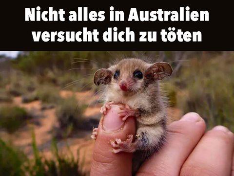Australien #derneuemann #humor #lustig #spaß