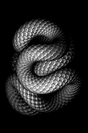 https://lh6.googleusercontent.com/-LCL5ZHNWgtU/Ul8CK2JDvoI/AAAAAAAAgHs/GAgSJXjHrHQ/w500/snake.gif