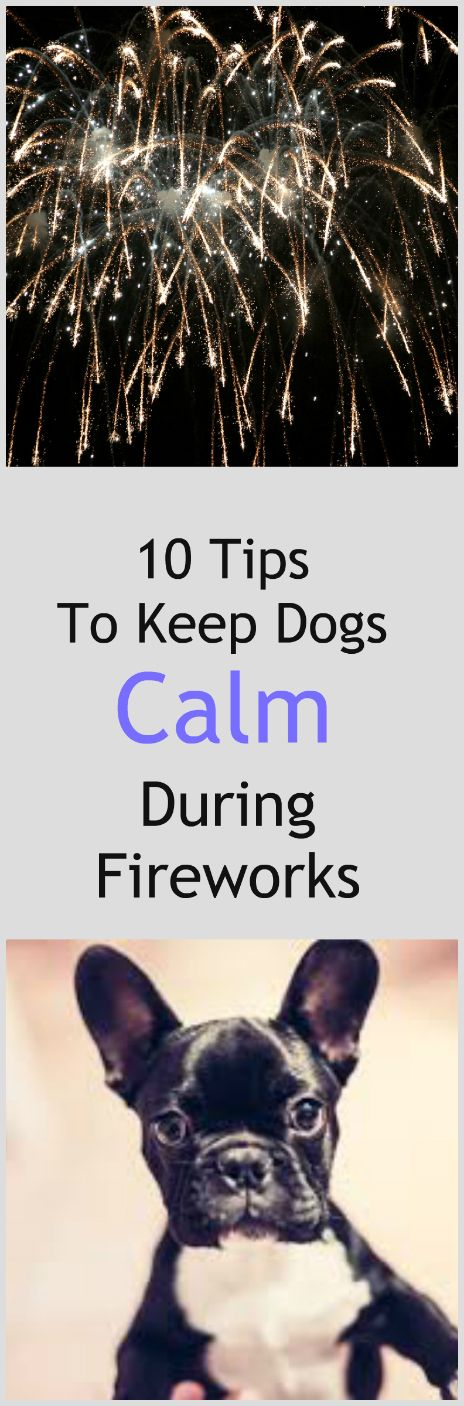 10 tips to keep dogs calm during fireworks.