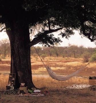 Garonga Safari Camp, Makalali Conservancy, Kruger National Park, South African Game Reserve