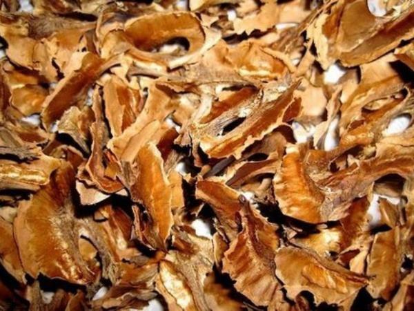 Панацея от всех бед? Или что можно полечить перегородками грецких орехов — В РИТМІ ЖИТТЯ