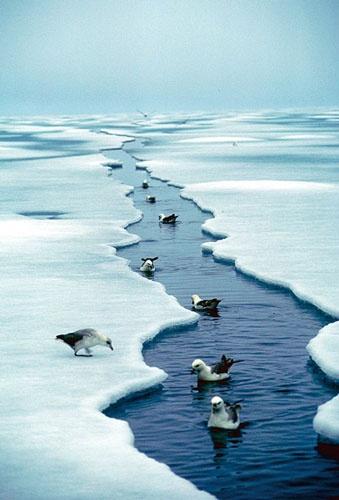 Isråk i Arktis - P_10.10.2012 - http://media.snl.no/system/images/signalbilder/a/arktis_israak.jpg