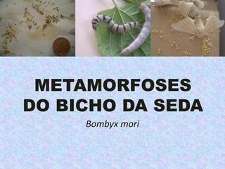 Metaformoses do Bicho da Seda  Material da Casa das Ciências disponível para download em: http://www.casadasciencias.org/cc/redindex.php?idart=303&gid=40118778