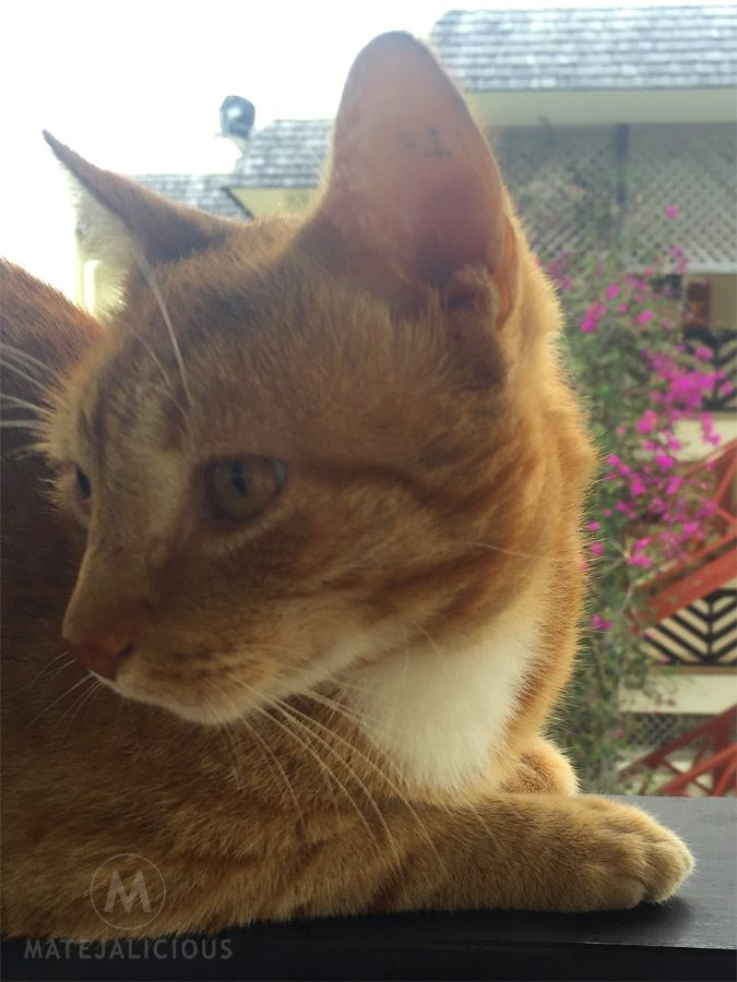 Cats of Rarotonga - Matejalicious Travel and Adventure