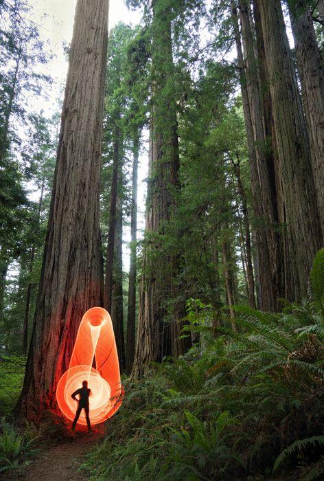 photographer Grant Mallory. Redwoods National Park, California