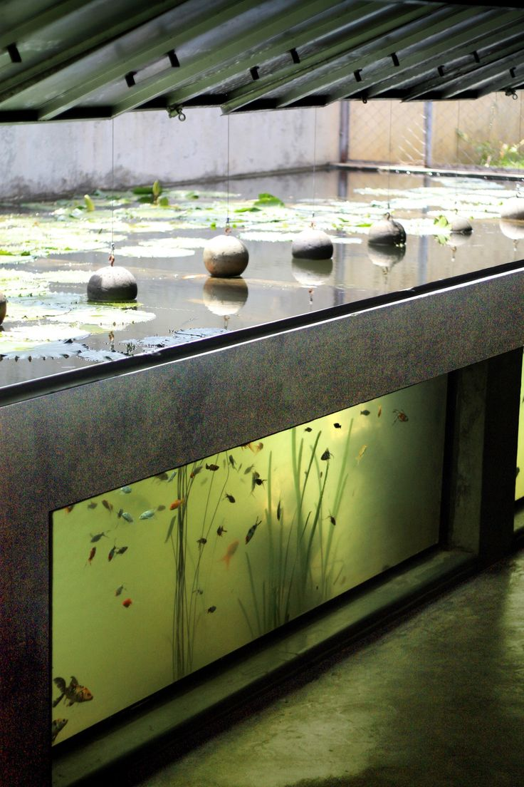 Scooped out of a plot of farmland twenty minutes outside Ahmedabad city, this house has been built for an aquarium shop owner to function as a place to breed...