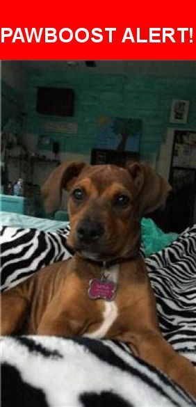 Please spread the word! Sativa / Iva was last seen in Navasota, TX 77868.    Nearest Address: FM 362, Navasota, TX