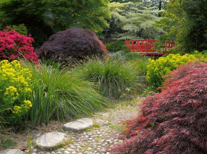 17 migliori idee su giardini rustici su pinterest for Cespugli fioriti da giardino