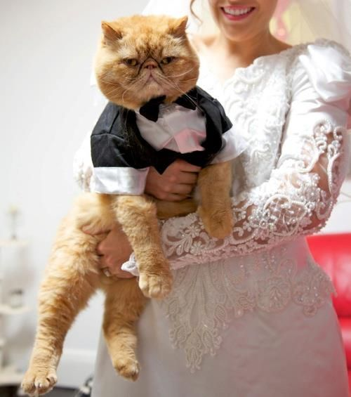 No, your cat does not want to wear a suit and be held awkwardly for your wedding photos. Diabeetus.