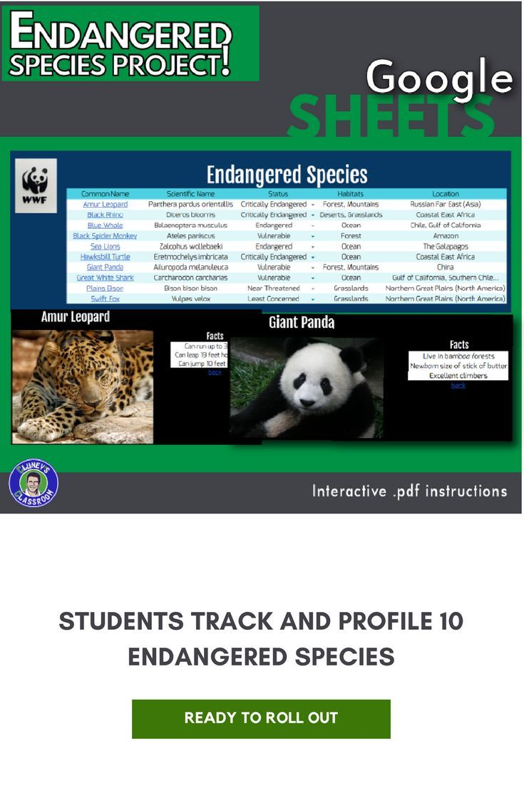 This project is a great vehicle for exposing students to some neat little formatting tricks to make their sheets look great. The premise is for students to research and present 10 animals that are on the endangered species list. Students will list each of the species in the main sheet, and also create an individualized tab (or sheet) that lists more information about the species. The subject matter (animals) appeals to a broad range of students, so it keeps them focused. It is a fantastic…