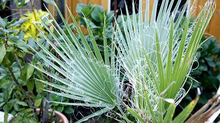 Spinnmilben an Zimmerpflanzen bekämpfen - Mein schöner Garten