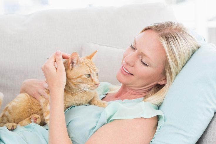Näihin+huvittaviin+kuviin+vain+kissanomistajat+voivat+samaistua