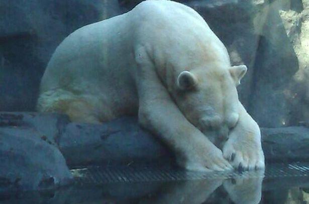 Arjantin'de Önemli Karar: Hayvanat Bahçeleri Yaşam Hakkına Aykırı!