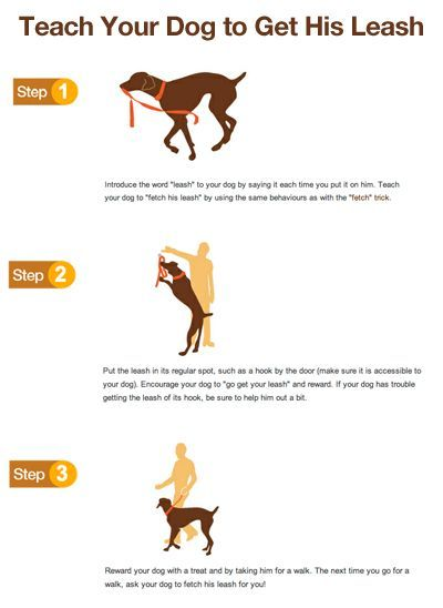 Teach your dog to get his or her leash - something new to teach them: