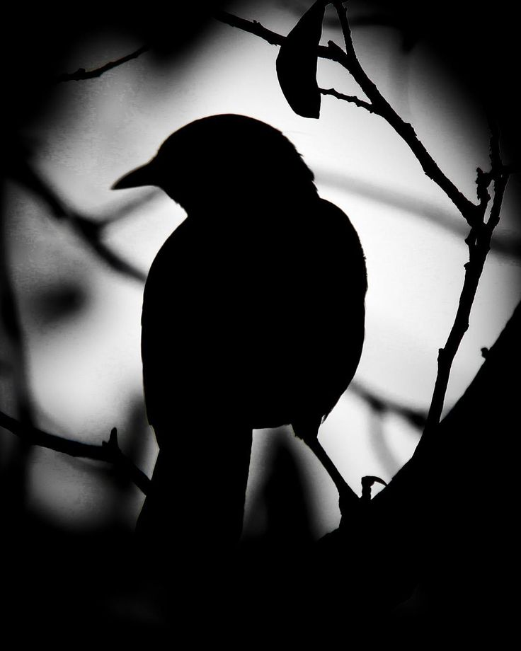 A silhouette of a feathered friend