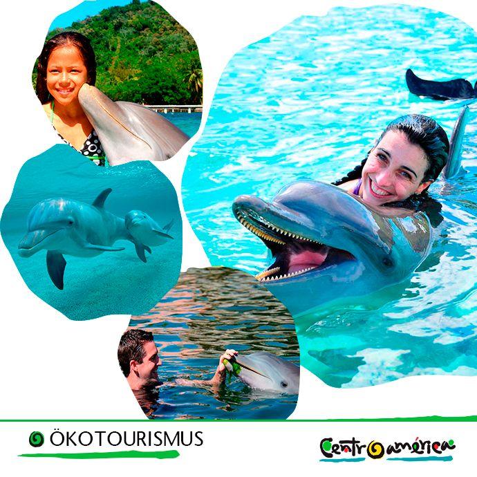 Mittelamerika bietet Ihnen die Möglichkeit, mit Delphinen in Freiheit zu tauchen. Besuchen Sie die kleine Insel Anthony´s Key in Honduras. Sie können auch mit Haien bei Cocos Island (Weltkulturerbe der UNESCO) in Costa Rica tauchen. Ein einmaliges Erlebnis!