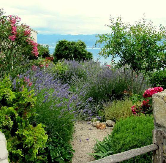 Les 25 meilleures id es concernant plantes for Bd du jardin botanique 50 bruxelles