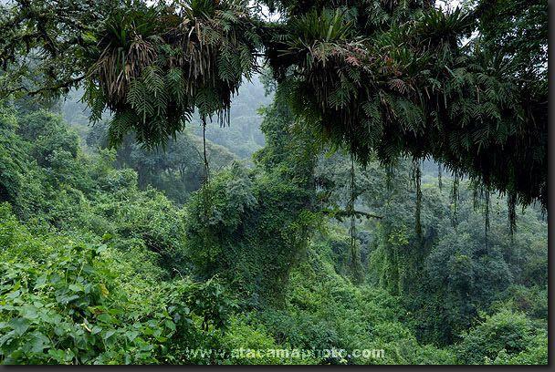 Los bosques tropicales lluviosos tienen mayor diversidad de árboles y de otras plantas que cualquier otro hábitat. En un bosque templado la variedad de ...