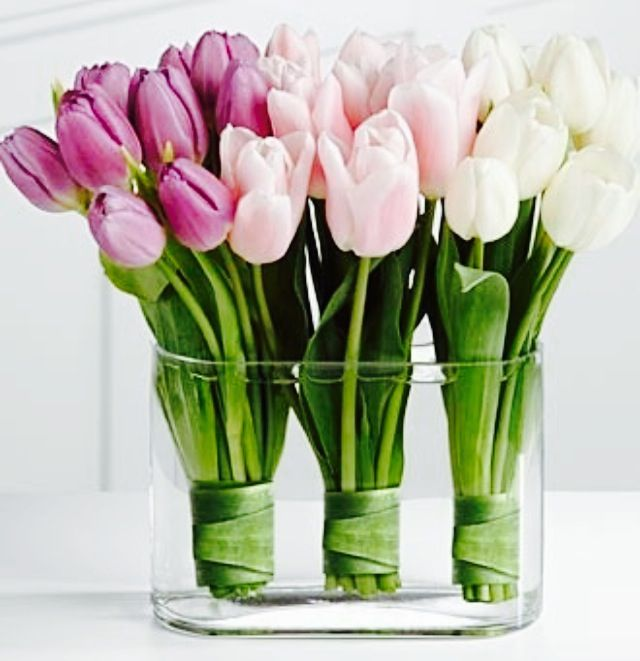 Tulips wrapped in their own leaves