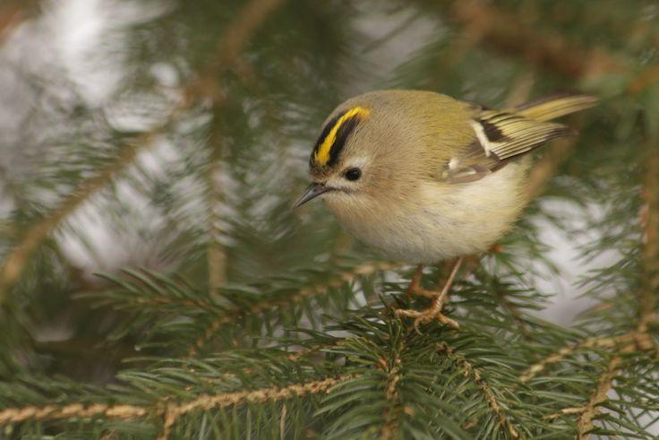 ptaki w ogrodzie i nie tylko