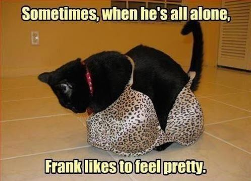 Appropriate pussy, cat humour. For the funniest pussy photos and quotes take a look at www.funnyjoke.lol