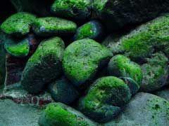 Aquarium Rocks and Caves Review