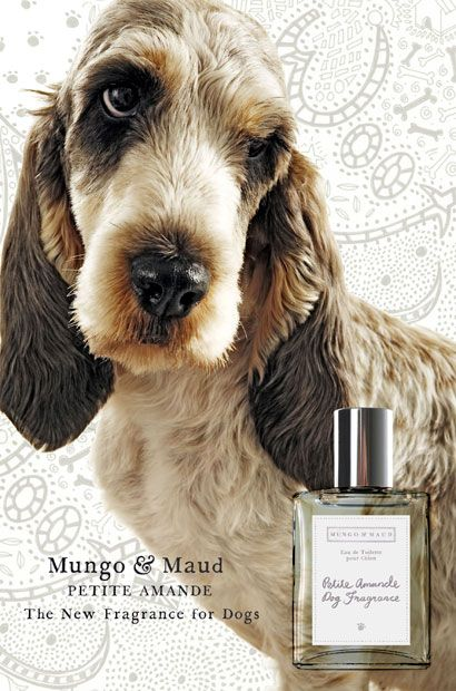 Quirky Christmas presents for your dogs - Telegraph: Dog perfume