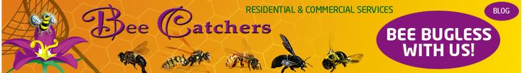 Bee Catchers, Los Angeles Metro Bee Removal