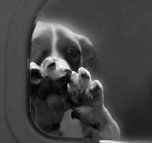 Quick links to share the petition: Stop Gassing The Animals In The Shelter | Yousign.org