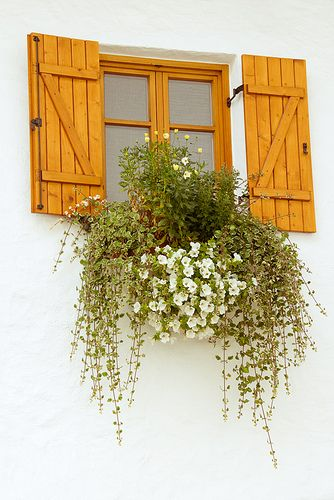 make a false window, maybe with saying or picture painted on, to hang on boring spot on fence.