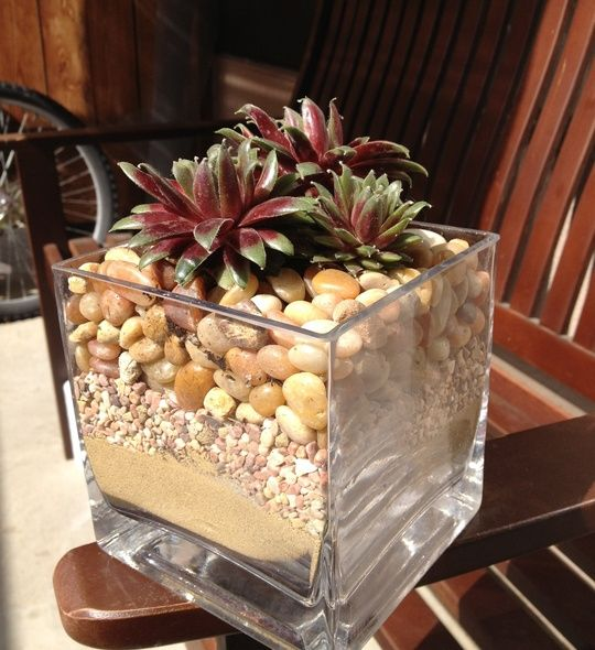 How to Create a Small Succulent Arrangement by Chelsea Lyon