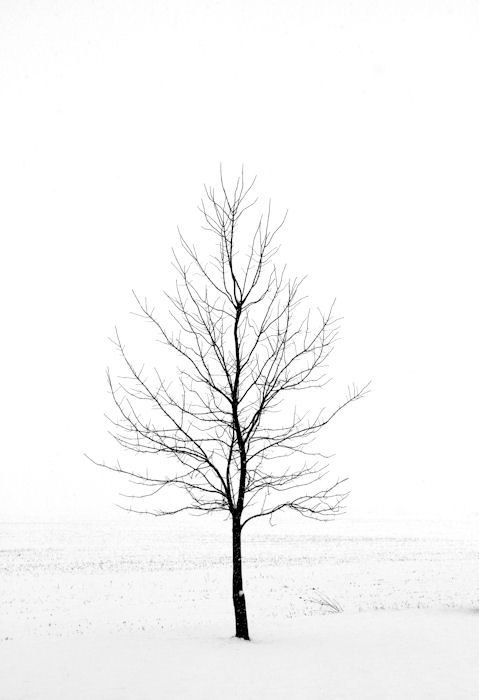 Winter Landscape Photography, Nature Photography, 16X24 Wall Mount, Snow, Dead of Winter, Black and White Art, Ready to Hang. $195.00, via Etsy.