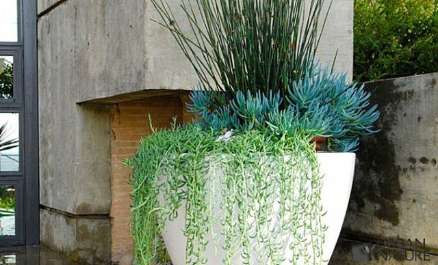 1000 Id Es Sur Le Th Me Arrangements De Plantes Grasses Sur Pinterest Plantes Grasses Plantes