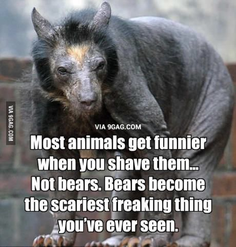 So if this is a shaved bear, does that mean a chupacabra is a bear with no hair? So fuzzy wasn't really fuzzy was he?!