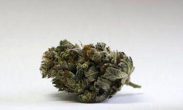 California Is Poised To Legalize Recreational Marijuana   Huffington Post