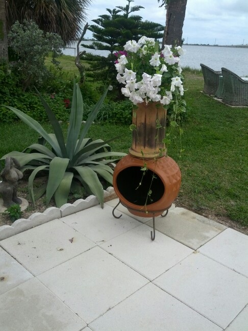 64 best images about planting things on pinterest for Flower fire pit