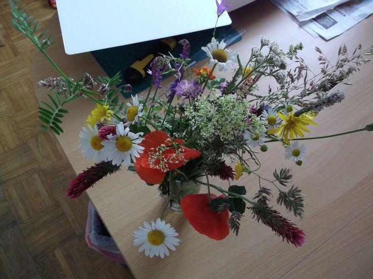 Blumen, Vol. 3