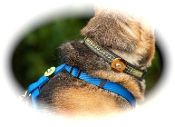 Collar Companion for your Pets - add essential oils to help calm nervousness and anxiety - or to repel mosquitoesEssential Oil