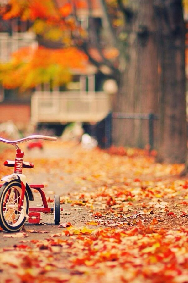 Take a little time to PLAY this fall! #fall #tricycle #kids