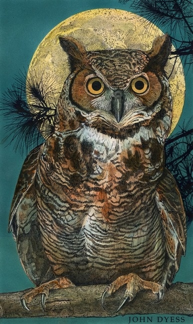 Great Horned Owl  by Studio Dyess, St.Louis