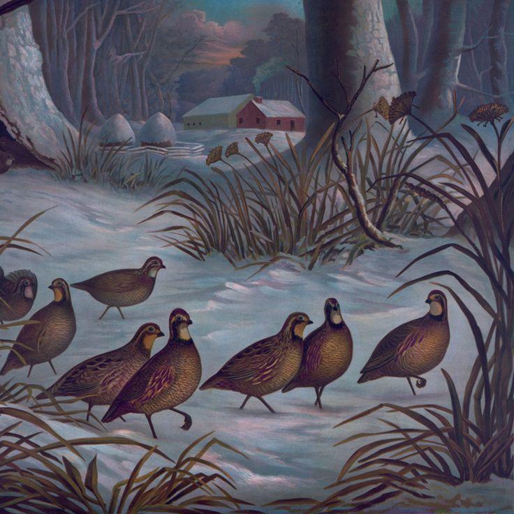 Старинные плакаты рук-чертежа печать на холсте пейзажи живопись стены украшены картинами животных изображение птицы в лесу