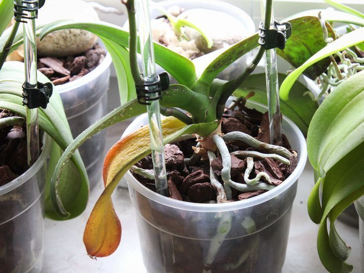 Orchid Root Or Flower Spike Orchid Diseases Orchids Easy Plants To Grow
